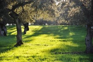 Encinar del parque natural utilizado en acciones publicitarias de TSD.